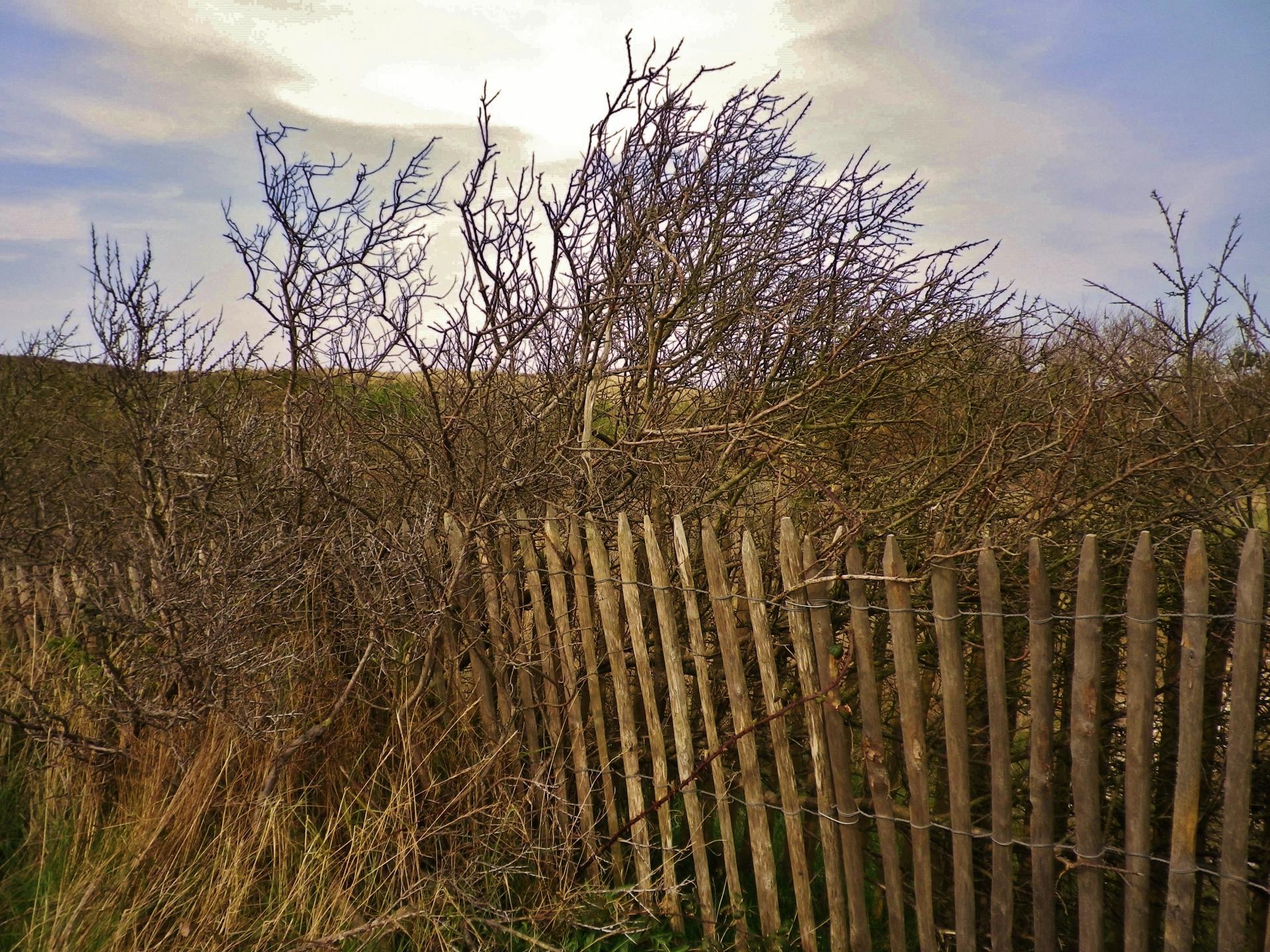 dunes de Sangatte