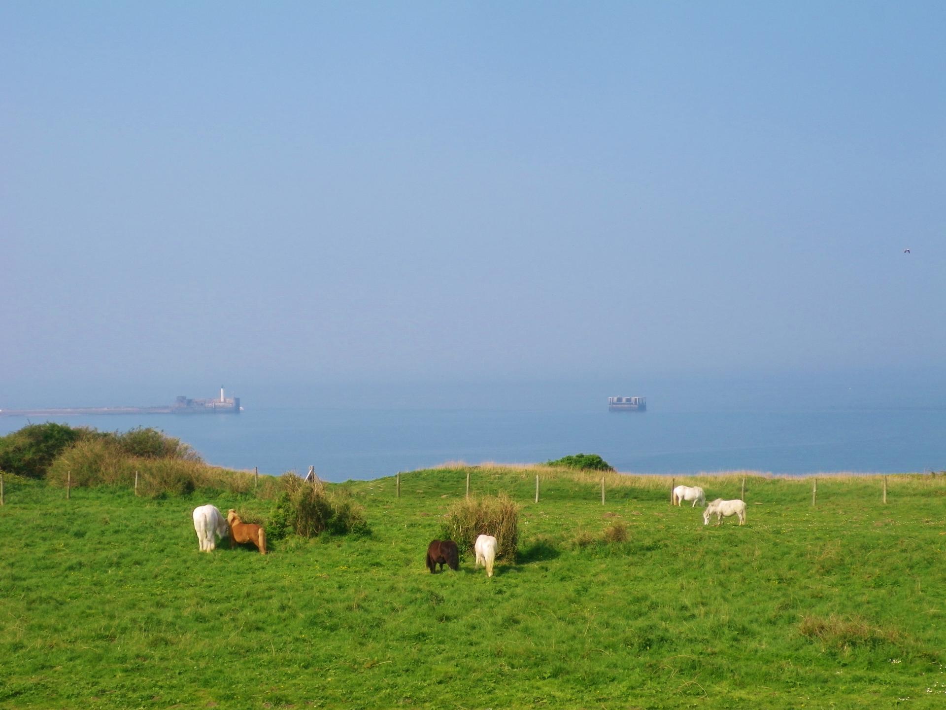 Boulogne chevaux sur la falaise de la creche