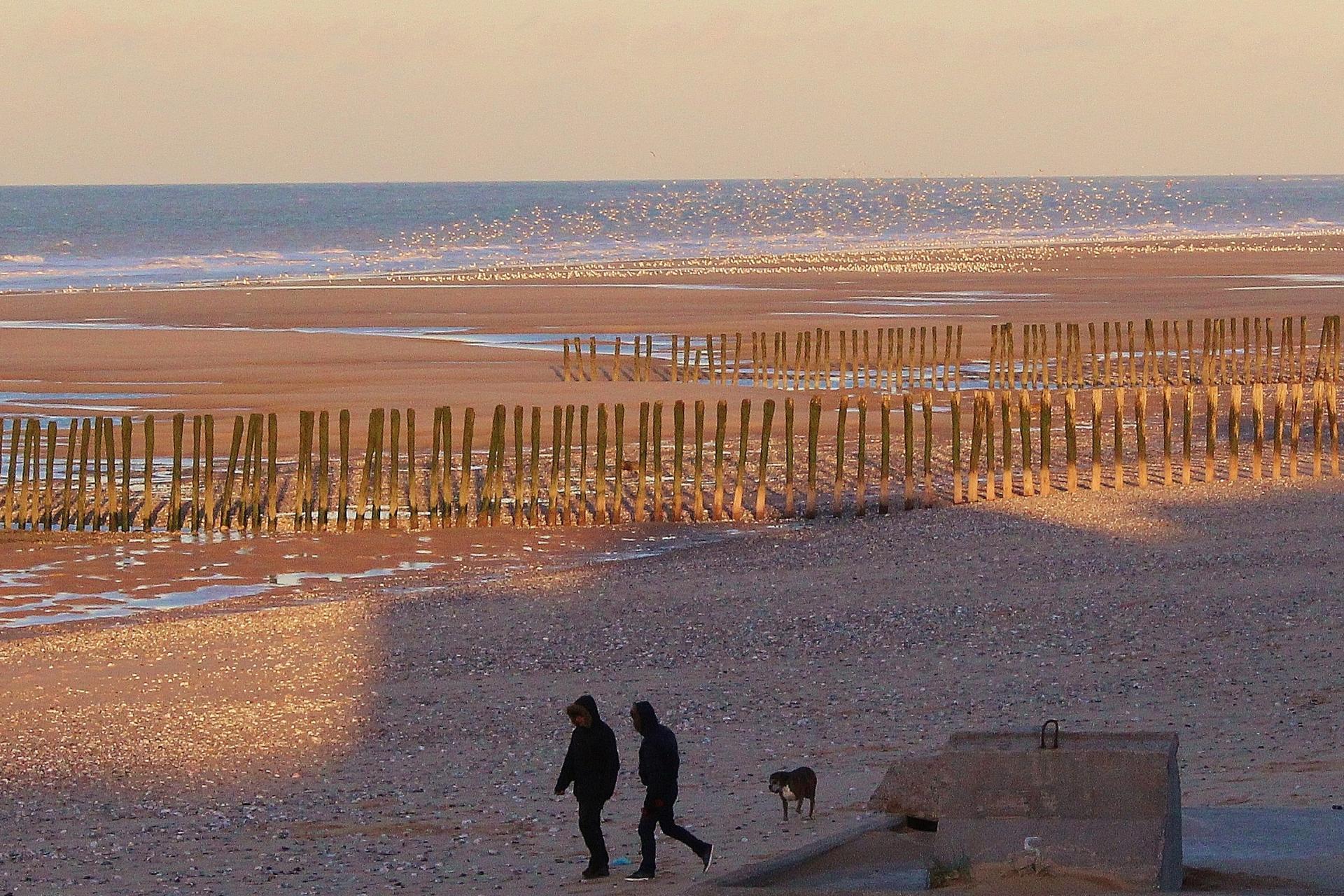 Calais top photo les mouettes a la plage