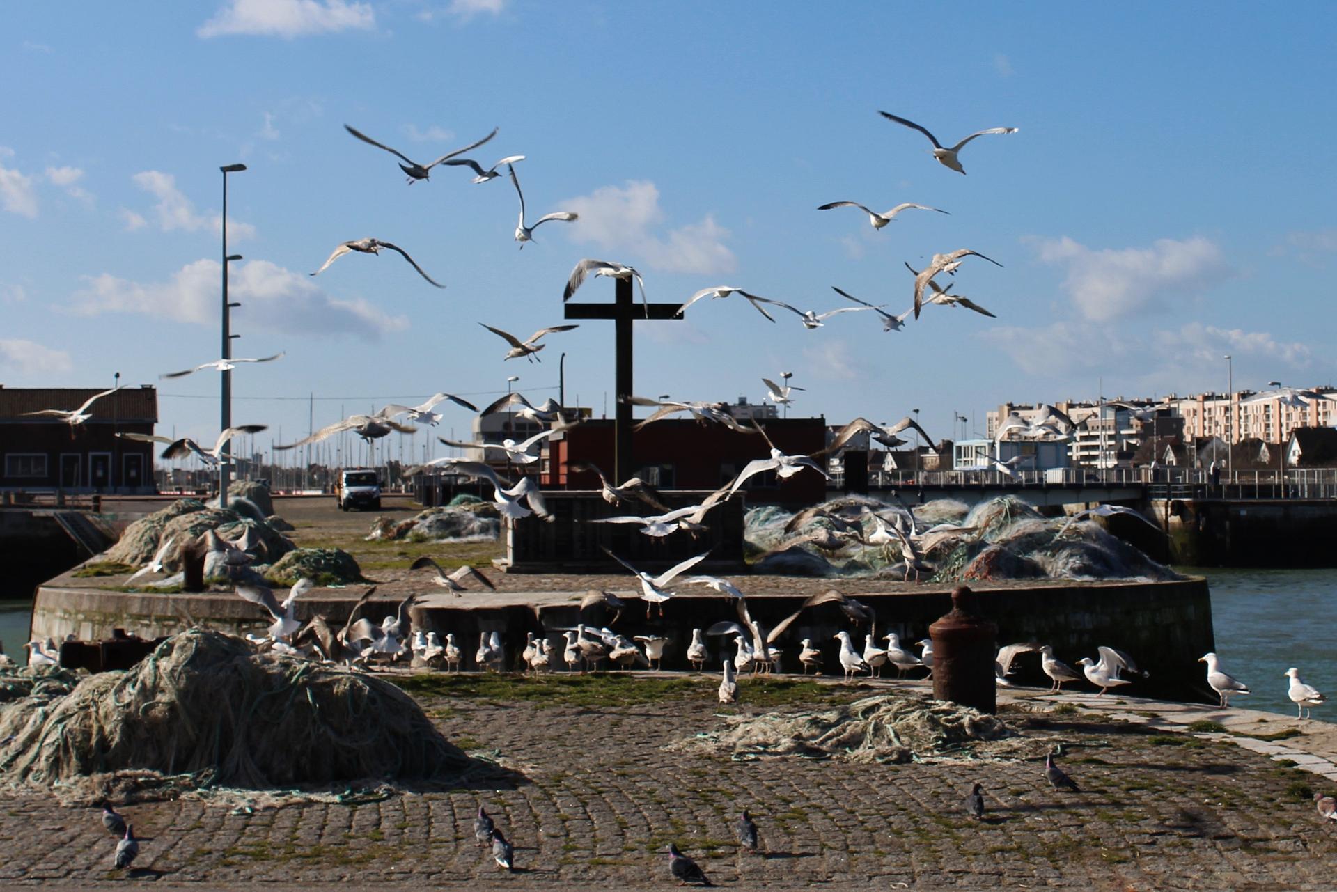 Calais top photo les mouettes et la croix