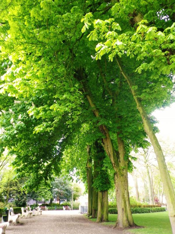 Calais arbres centenaires du parc saint pierre