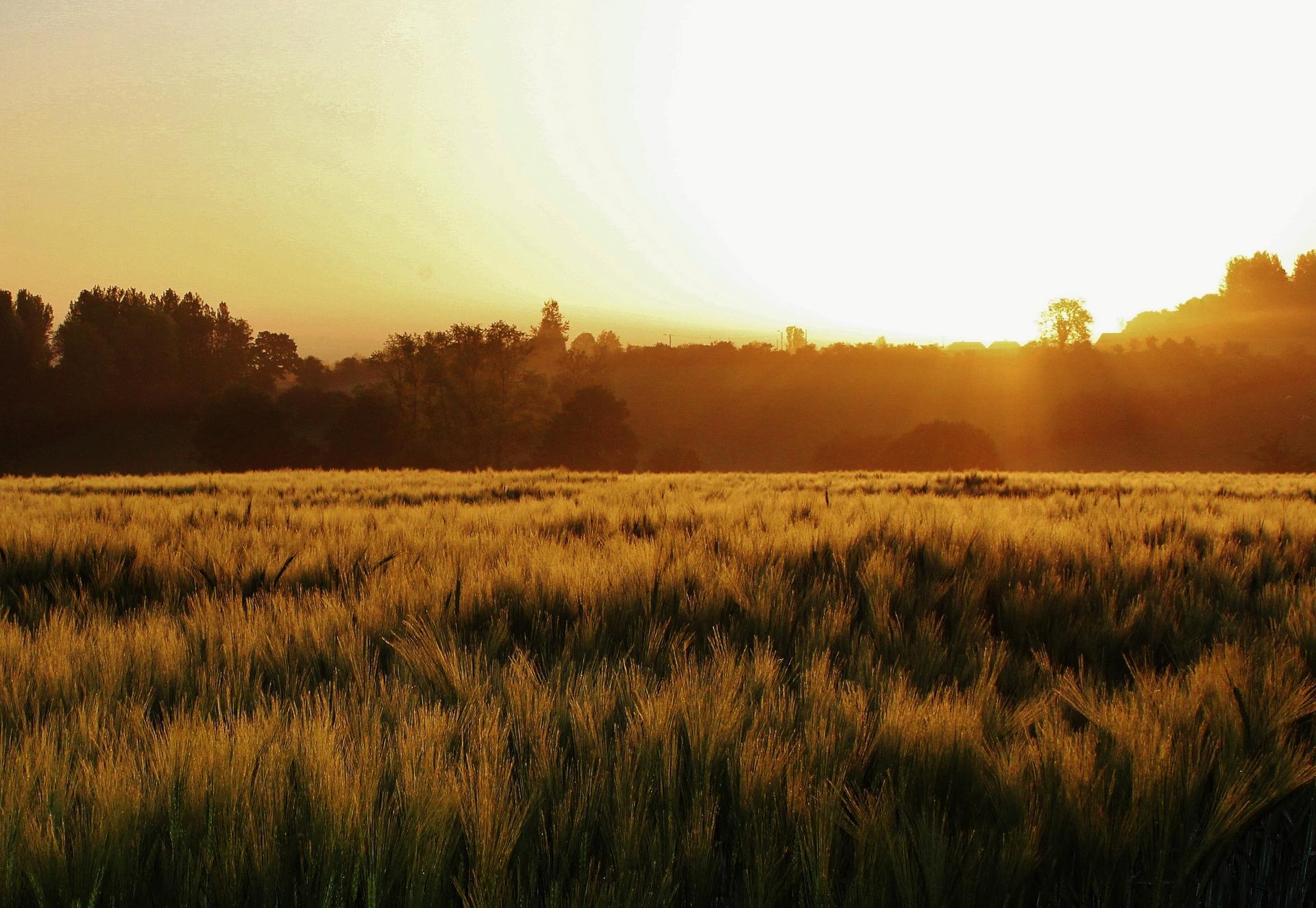 Conteville top photo lever de soleil et brume sur les champs