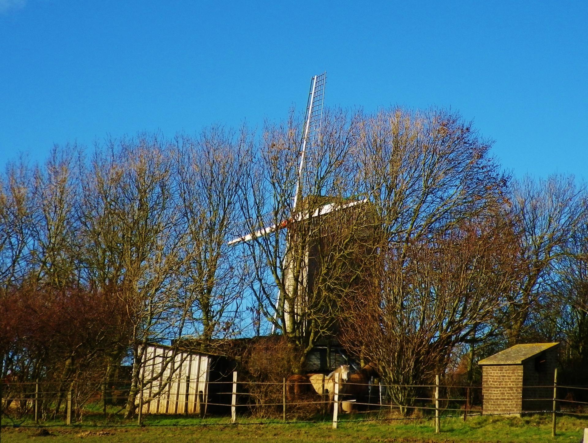Coquelles photographie du moulin