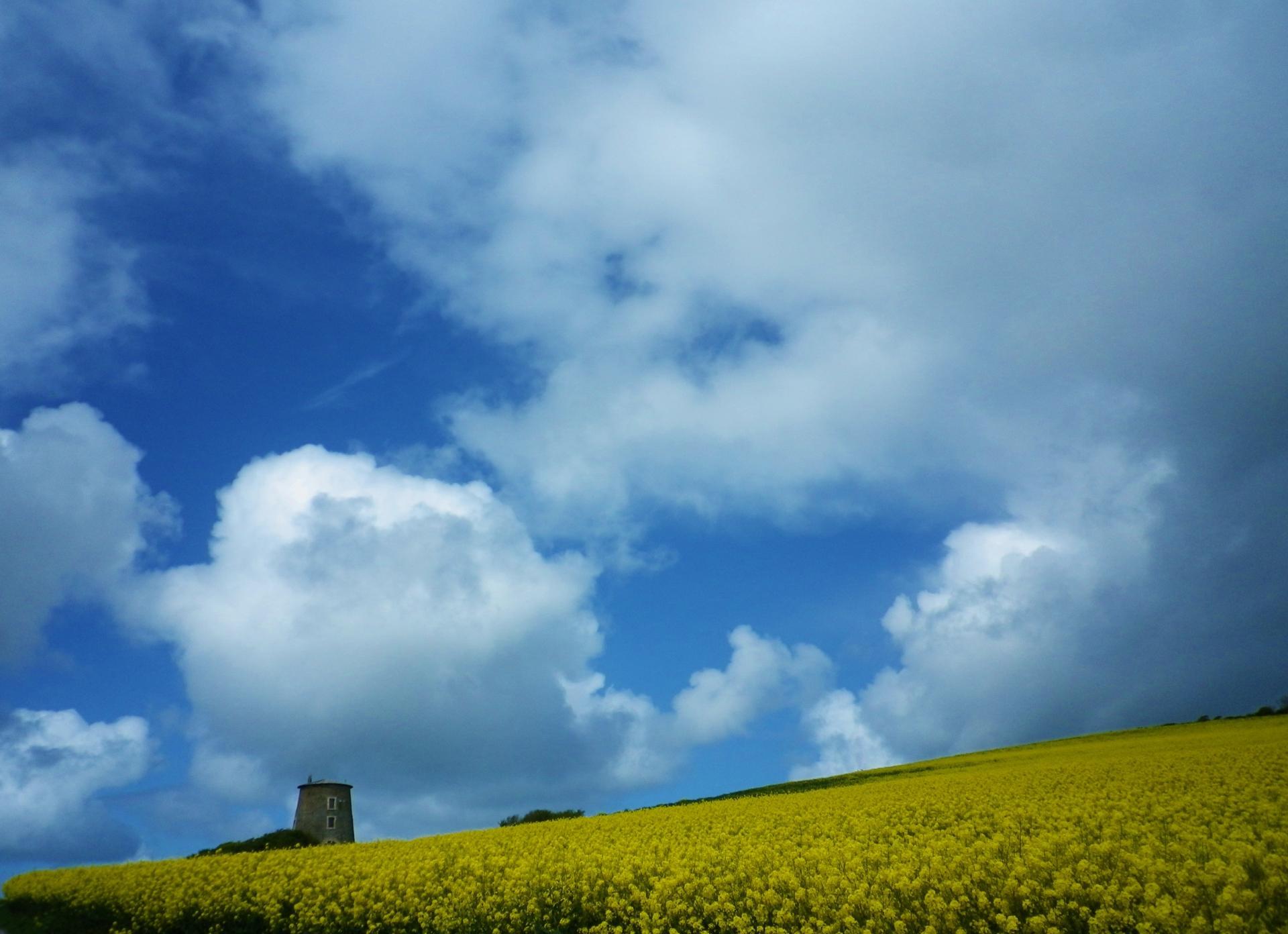 moulin d'escalles parmi les champs de colza
