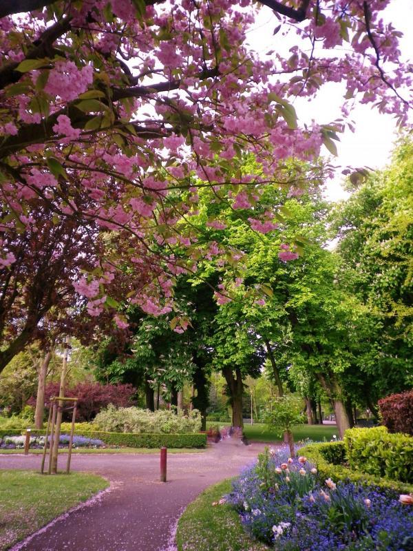 cerisier à fleurs au parc saint pierre de calais