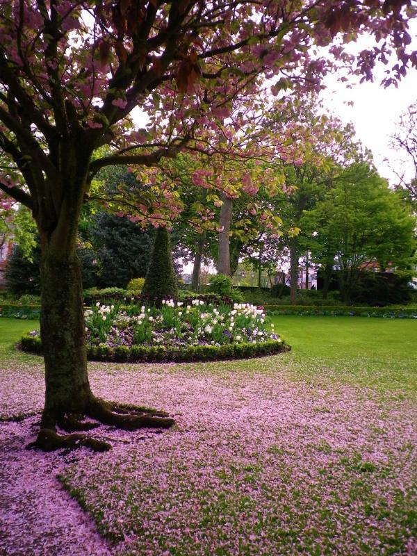 Pluie de petales roses au parc saint pierre